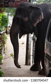 SIGIRIYA,SRI LANKA - FEBRUARY 03.2018:  shop owners feeding an elephant on February 03,2018 in Sigiriya, Sri Lanka