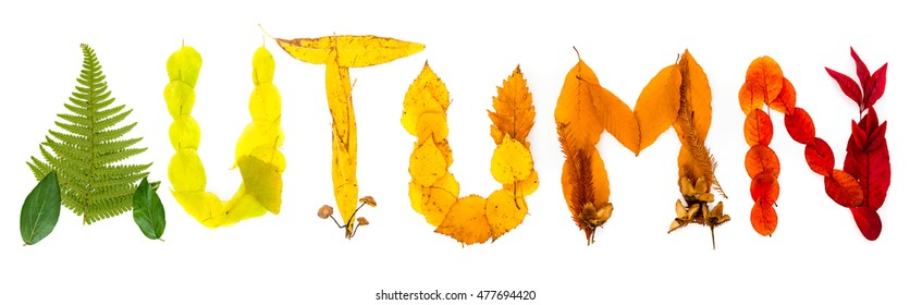 """Sign """"Autumn"""" made of autumnal natural objects. Colorful leaves and mushrooms arranged into the """"Autumn"""" text. Autumnal mood."""