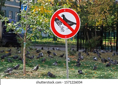 "A sign ""Do not feed the pigeons"" stands on the background of a flock of birds"