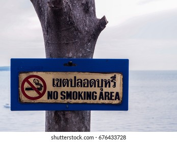 "a sign hangs on a tree near the sea ""no smoking area"""