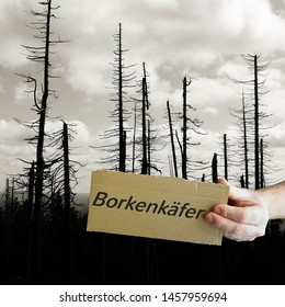 "Sign with the inscription ""bark beetle"". In the background dead trees in the Harz National Park."