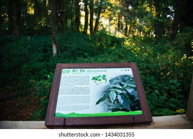 Sign No.9  25/jun/2019 Ang Ka Luang Nature Trail is an educational nature trail inside a rainforest on the peak of Doi Inthanon National Park in Chiang Mai, Thailand. very popular for photographer