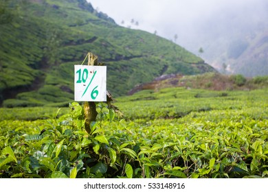 A sign with numbers standing between in the middle of a tea plantation