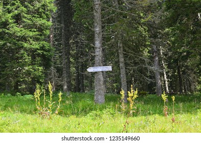 """Sign on a tree in a forest with a text in Serbian written in Cyrillic alphabet with the meaning """"Jogging track"""" which is also written."""