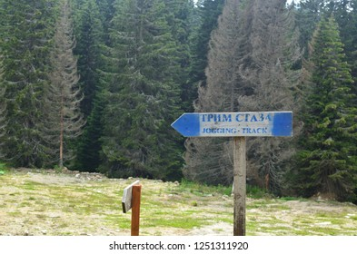 """Sign on a tree in a forest with a text in Serbian written in Cyrillic alphabet with the meaning """"Jogging track"""" which is also written"""
