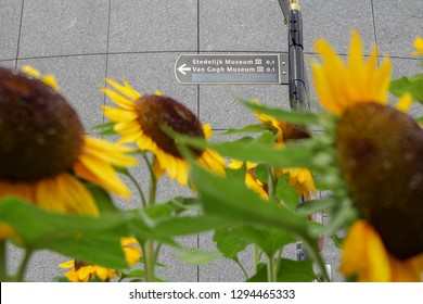 A sign pointing to the Van Gogh Museum and the Stedelijk Museum in Amsterdam, the Netherlands, through bright yellow sunflowers, which van Gogh made iconic in his paintings.