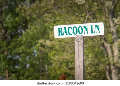 Sign post with Racoon LN written on it in front of forest on camping