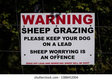 Sign: Warning sheep grazing, please keep your dog on a lead, sheep worrying is an offence, dogs off lead and worrying sheep will be shot. Read and black writing on white background. Attached to fence