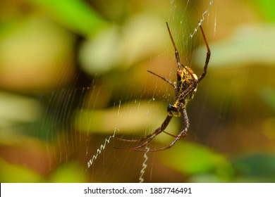 Signature spider on the web. This spider also known as the Writing Spider and the Garden Spider. Used selective focus.