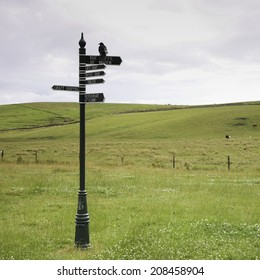 Signpost on green grass with black crow on top