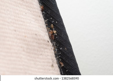 Signs of Bed Bugs on Bed Mattress