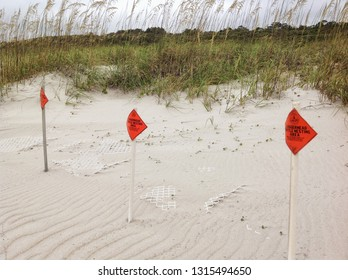 Signs are posted on a Myrtle Beach South Carolina beach warning people to stay off the dunes where the loggerhead turtle is nesting.