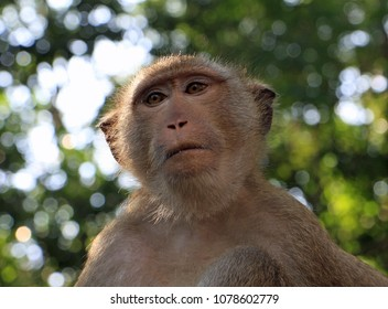 Suck the monkey/nautical expression