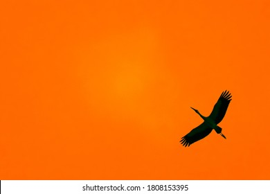 Sihouette of a bird flying in the sky during sunset
