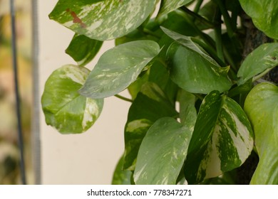 Silent money plant
