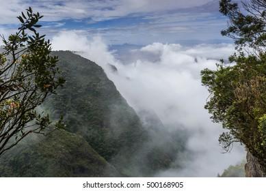 Silent valley in Kodaikanal, Tamil Nadu, India
