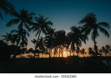 silhoette of coconut trees during sunset in sabah, malaysia