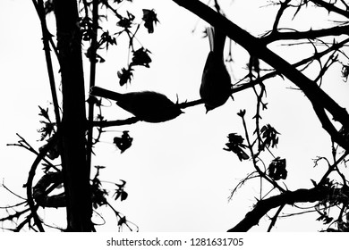 Silhouette of 2 birds on a branch, wallpapper, down up
