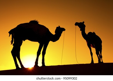Silhouette of 2 Camels on the Dunes of the Thar Desert, Rajasthan - India