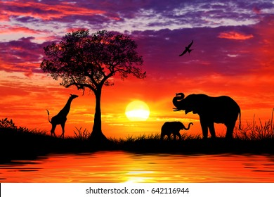 Silhouette of African Animals at Sunset
