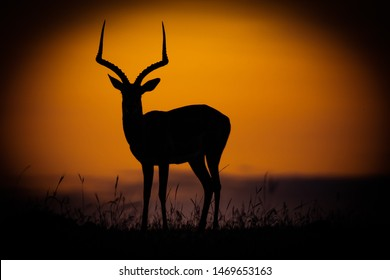 Silhouette of African antelope against a setting sun