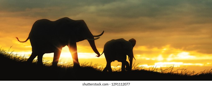 Silhouette African Elephants baby and mother at sunset or sunrise. Horizontal web banner with room for text