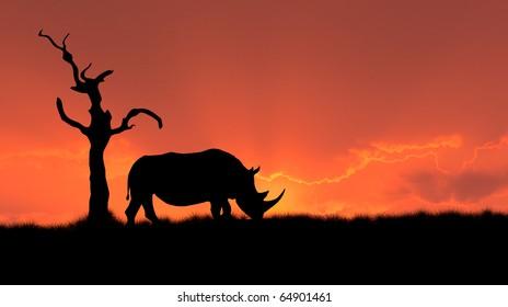silhouette of african white rhinoceros against orange dusk dawn sky, tree
