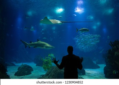 Silhouette amazed by an aquarium.
