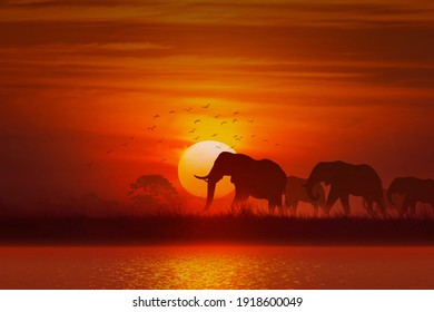 silhouette Animal, elephant and grass and tree at sunset