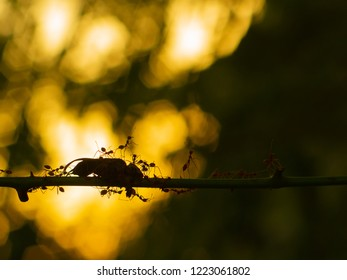 Black Tree Ant Images, Stock Photos & Vectors | Shutterstock
