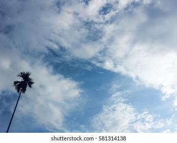 Silhouette of areca nut tree on bright sky