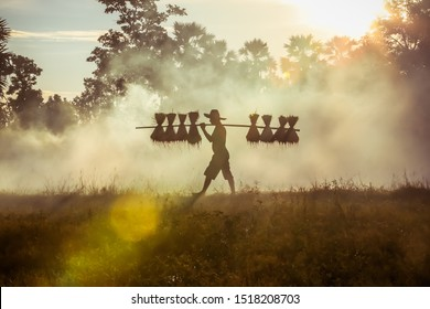 Silhouette of asian farmer Bearing seedlings of rice to plant, Asian farmer Bearing rice seedlings on the back before the grown in paddy field. concept agriculture working