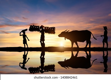 Silhouette of Asian farmer harrowing rice field lifestyle of asian people in countryside,
