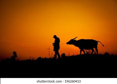Silhouette of Asian farmers and buffalo