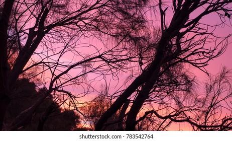 Silhouette of Australia bush trees