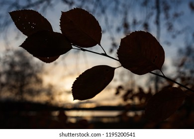 Silhouette autumn leaves and sunrise