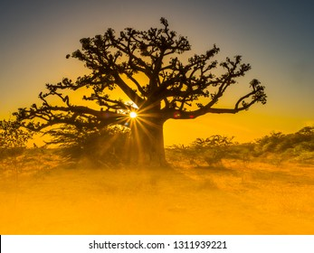 Silhouette of baobab tree at sunset with the yellow background. Tree of happiness, Senegal. Africa