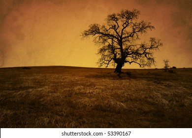 Silhouette of bare oak tree in Winter, antique grunge, artificially aged, San Joaquin Valley, California..