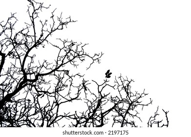 silhouette of bare tree branches on white background