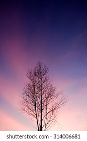 Silhouette of bare tree with cloudy sky,soft focus