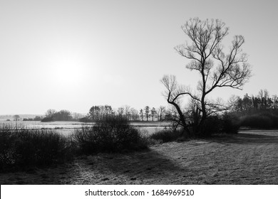 Silhouette of bare tree crown in tranquil scenery with natural meadows and sky. Black and white melancholy morning landscape after sunrise in early spring. Rural nature around Turovec, South Bohemia.