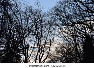 silhouette bare trees and branches in backlit at the early daybreak