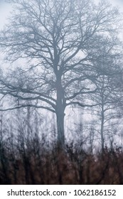 Silhouette of bare winter trees in mist.