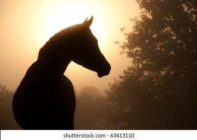 Silhouette of a beautiful Arabian horse against sun shining through heavy fog, in sepia tone