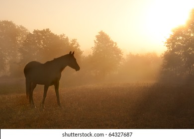 Silhouette of a beautiful Arabian horse against sunrise in heavy fog, in rich sepia tone