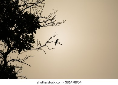 silhouette beautiful bird on branch