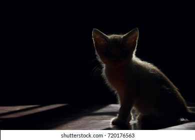Silhouette Of A Beautiful cat On A Black Background. Silhouette Of A Kitten On Black Background, Cropped Shot.White silhouette of a cat over black. Kitten sitting in the dark room, silhouette.