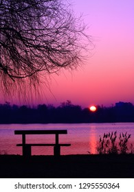 Silhouette of a bench at the foot of a tree and reeds at the water's edge in the morning. Focus on the sun rising in a beautiful pink colored sky in the background in winter in a beautiful landscape