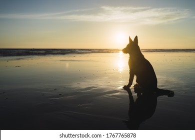 A silhouette of a big dog sitting on the coastline and the sunset over the sea