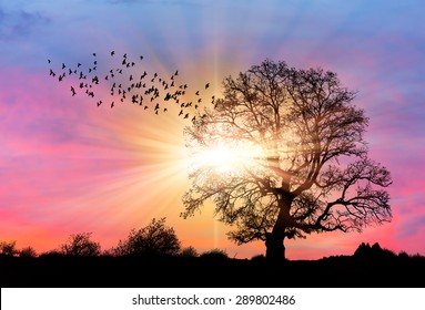 Silhouette of a big mighty oak against sunset